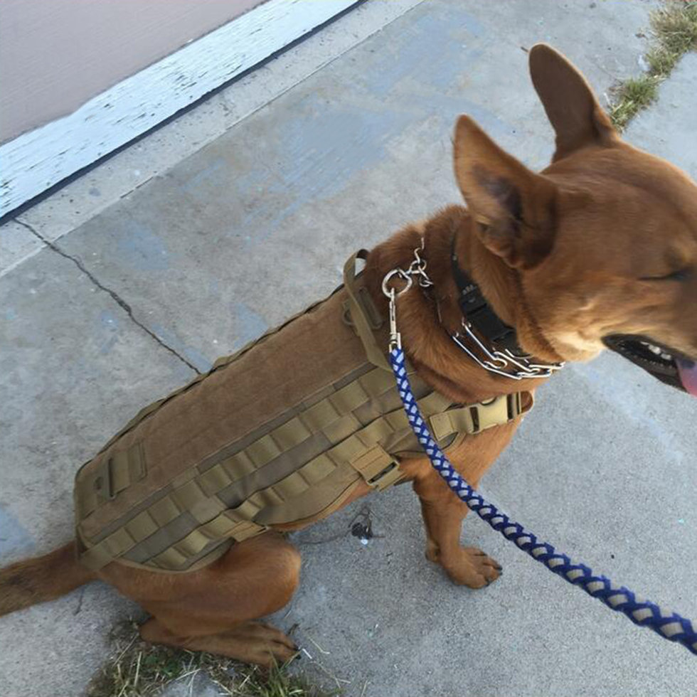 Load bearing dog harness