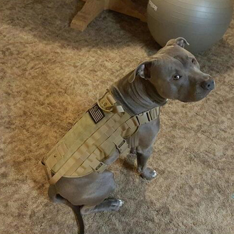 dog harness vest how to put on